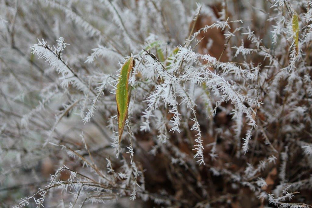 Winter in Isenbüttel
