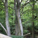 Wanderung auf dem Baumwipfelpfad