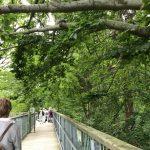 Baumwipfelpfad in Bad Harzburg