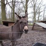 Begrüßung auf dem Tierhof in Bokelberge