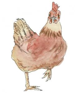 Bruni, das Huhn