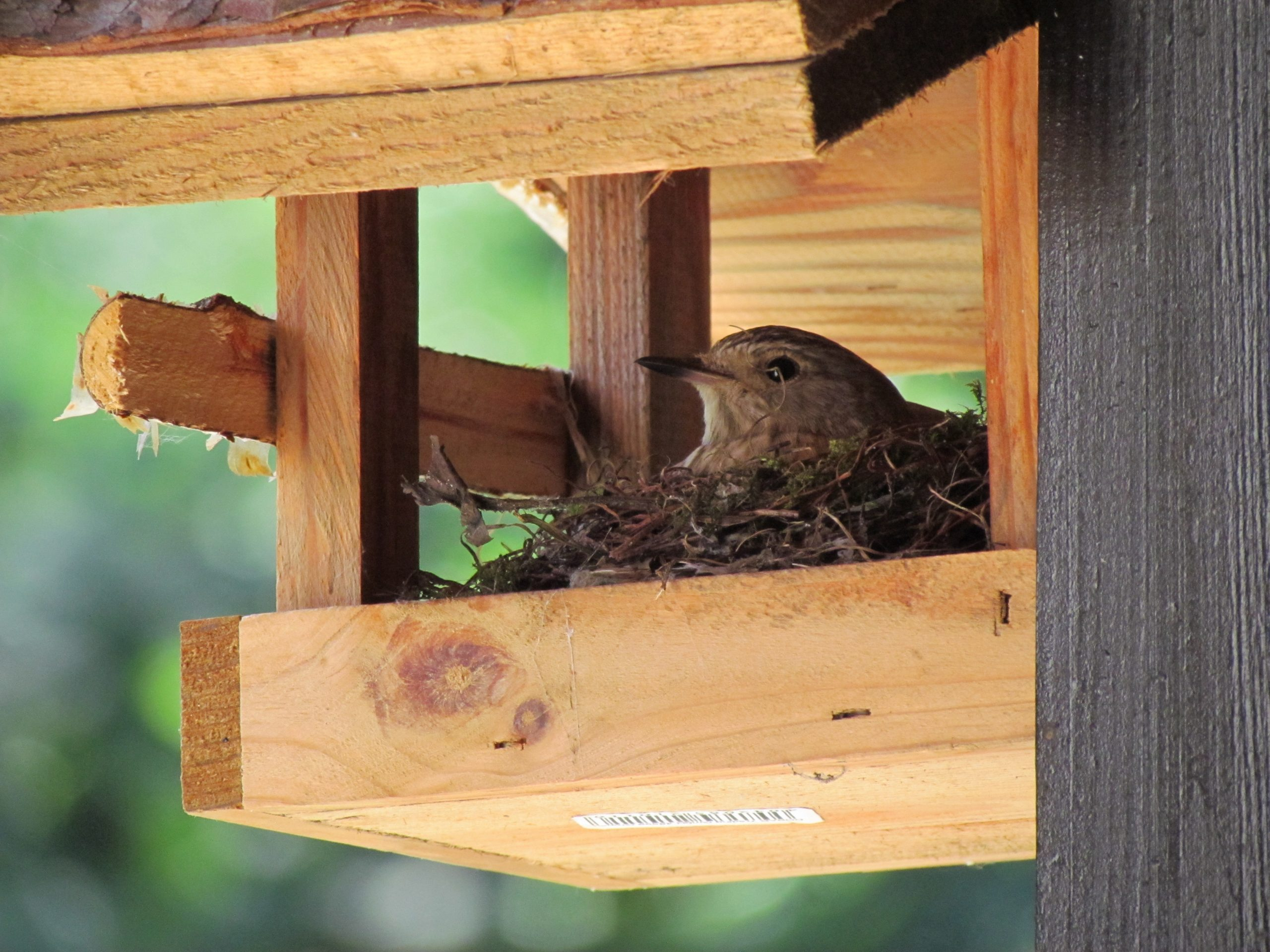 Brüten im Vogelhaus