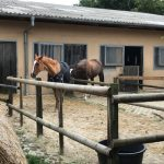 Pferde auf dem Hof in Isenbüttel