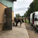 neue Schuhe für die Pferde auf dem Hof in Isenbüttel