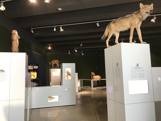 Sielmann Ausstellung in Schöningen